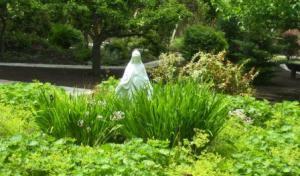 June_21_garden_pictures_001